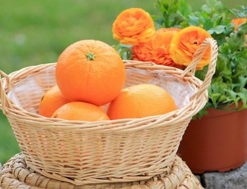 Unser Frucht der Woche – Orange!